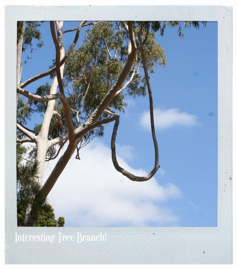 Dt tree