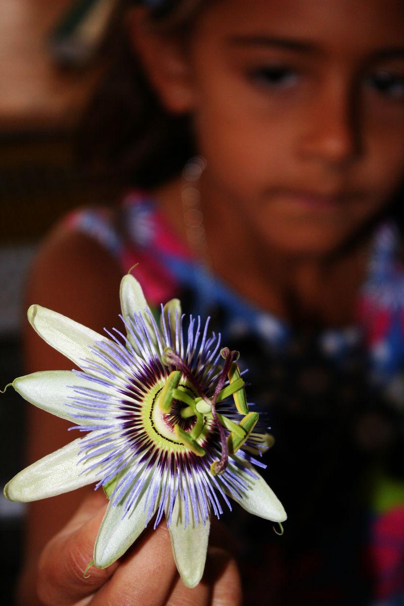 Tamra flower 3